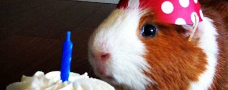 The-Cutest-Animals-Ever-Celebrating-Their-Birthday-3